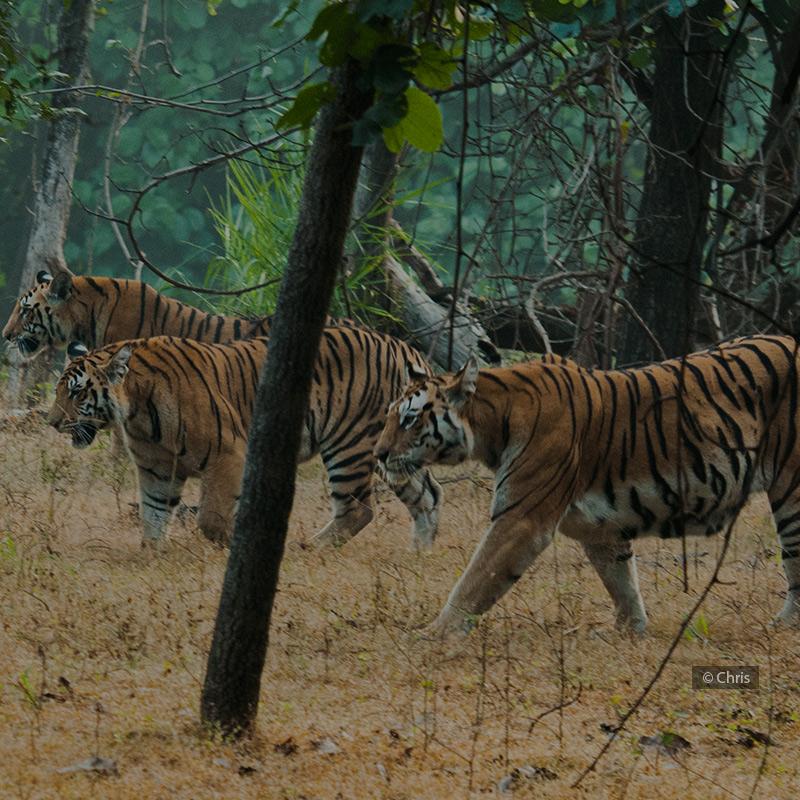 India Wildlife Travel Agents,Wildlife Travel Agency in India